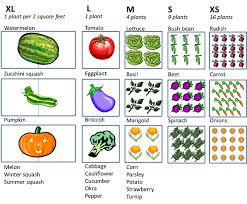 Companion Gardening Layout Brilliant Ideas Square Foot Vegetable Garden Layout Garden Layout