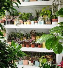 low light outdoor plants indoor potted plants delivered to your door u2013 the sill