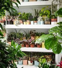 indoor potted plants delivered your door u2013 sill