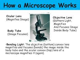 compound light microscope parts and functions parts of the microscope and their functions