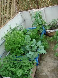 balcony vegetable garden image landscaping u0026 backyards ideas