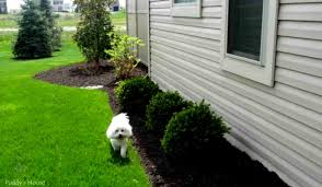 diy landscaping ideas on a budget nyapu rocks amys office