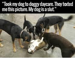 Dancing Dog Meme - 25 best memes about dog dancing dog dancing memes