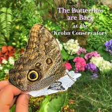 the butterflies are back at the krohn conservatory adventure