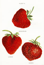 strawberry margarita cartoon 19 best clip art images on pinterest clip art strawberries and