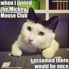 Mickey Mouse Meme - mickey mouse club fail cute pet humor funny lol meme humor