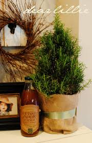 172 best rosemary images on pinterest christmas ideas kitchen