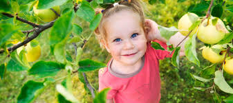 where to go apple picking with kids near atlanta mommy nearest