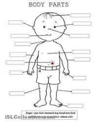 parts of the human body the human body human body and worksheets