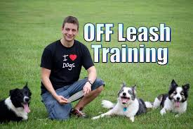 Cool Off With A Walk by Do You Want Your Dog To Stay With You Off Leash Youtube