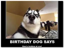 Happy Birthday Dog Meme - funny happy birthday dog meme rusmart org