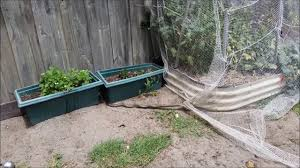 eastern brown snake in my backyard youtube