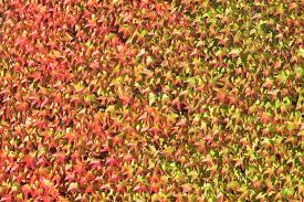 free images leaf flower soil botany season leaves