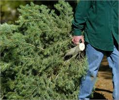 dfw cities offering christmas tree recycling greensource dfw