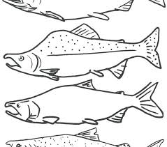 salmon fish coloring page salmon coloring pages salmon coloring pages free coloring page of