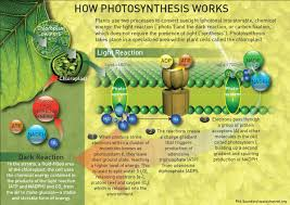The Light Reactions Of Photosynthesis Use And Produce Artificial Photosynthesis Saving Solar Energy For A Rainy Day