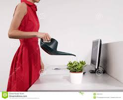 Desk Plant Female Office Worker Watering Desk Plant Stock Image Image 31831451