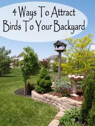 What Is A Backyard Garden 256 Best Backyard Birds Images On Pinterest Backyard Birds For