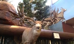 fake deer nevada mule deer