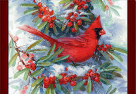 cardinal in branches box of 16 cards by image arts