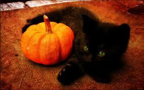 cute pumpkin wallpaper cats collage id 167101 u2013 buzzerg