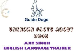 unknown facts about dogs authorstream