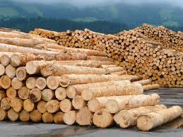 wood supplies build or burn competition for wood on the rise tum