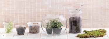 how to make a classic glass bowl terrarium quarto homes