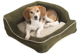 Dog Beds With Cover 4 Scary Things In Your Dog U0027s Bed Can Be Harmful To Your Pets Health