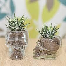 succulent kits excellent unique black traditional plastic in glass skull vase