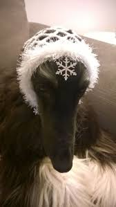 afghan hound tattoo 208 best afghan hound images on pinterest afghans afghan hound
