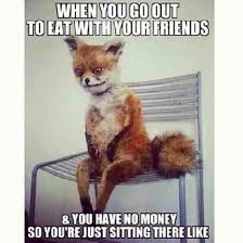 Taxidermy Fox Meme - these fox memes crack me up lol lol pinterest foxes memes