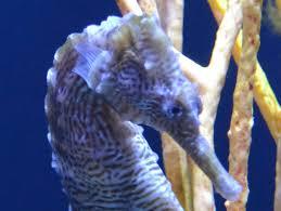 chesapeake bay native plants maryland national aquarium waterblog