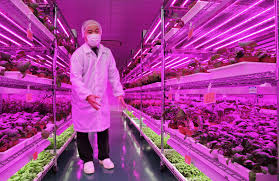 panasonic ventures into vertical farming uponics hydroponics