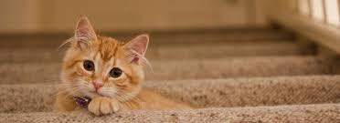 why cats love a raw diet u2013 corrina u0027s corner decatur