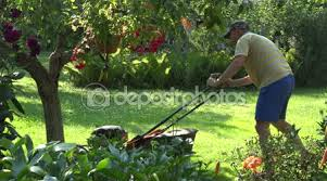 Backyard Fruit Trees Male Worker Man Mowing Grass Between Flowers And Fruit Trees In