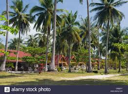 season bungalow hotel under palm trees golden pearl beach ko jum