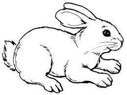 drawn bunny simple pencil and in color drawn bunny simple