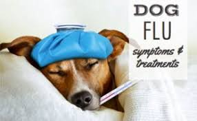 boxer dog upset stomach tips to cure your dog u0027s upset stomach caninejournal com
