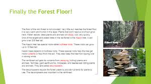 what are rainforests by miss rodriguez ppt video online download