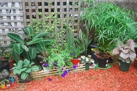 plants indoors plants flowers indoor plants