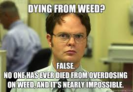 Marijuana Overdose Meme - the best of the schrute facts meme