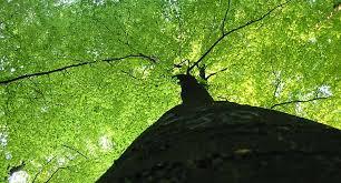 taddiken tree