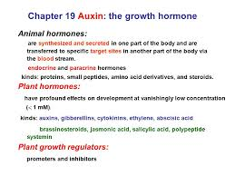 chapter 19 auxin the growth hormone animal hormones are