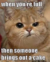 Saturday Meme - funniest cat memes thechive