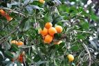 Toàn Quốc - Bán <b>cây</b> giống ăn <b>trái</b> trồng <b>vườn</b> &amp; chậu, hạt giống <b>...</b>