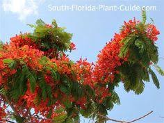 plant guide and list of trees and other plants for south florida