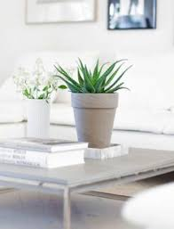 Beautiful Indoor Plants 32 Beautiful Indoor House Plants That Are Also Easy To Maintain
