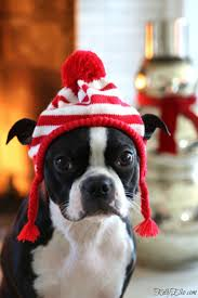 245 best christmas with critters images on pinterest animals