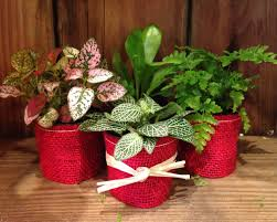miniature house plants perfect teachers gifts blumen gardens